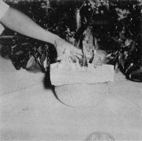Altar photo image