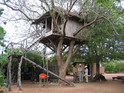 Treehouse photo image