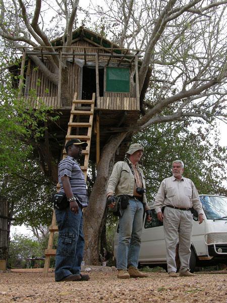 Tree House photo image
