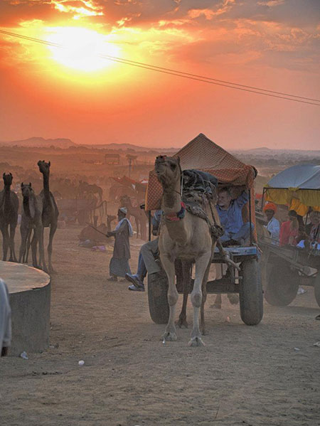 Camel Cart photo image