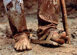 Traveler's Feet photo image