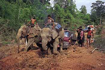 Elephants Pulling Truck photo image